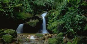 Pădure din Brazilia